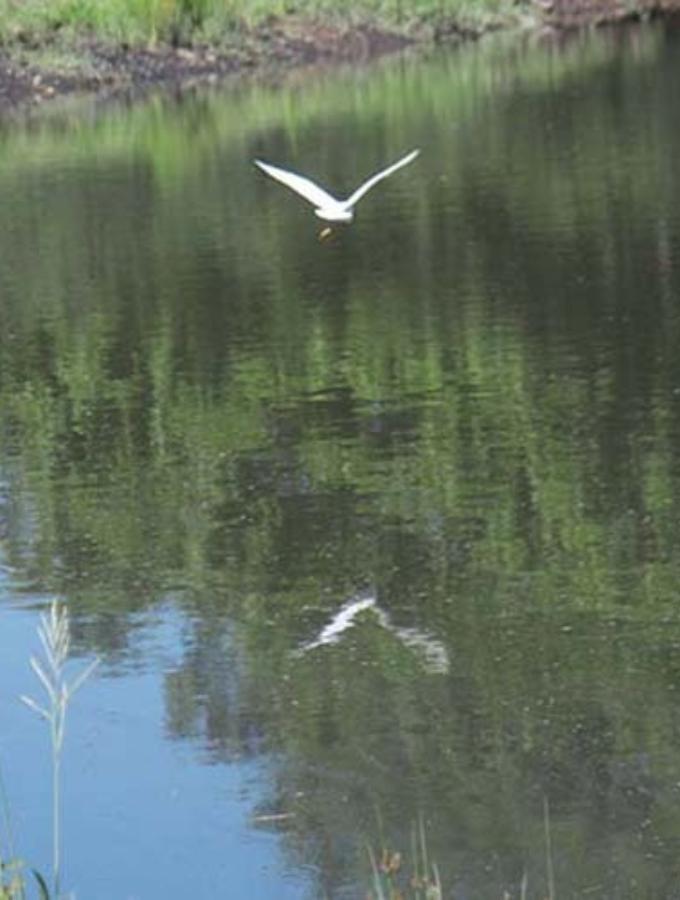 Birding @ theBEND